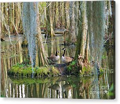 Haven Acrylic Print by Sheila Ping