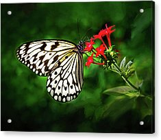 Haven't You Noticed The Butterflies? Acrylic Print
