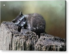 Acrylic Print featuring the photograph Having A Rest by Eva Lechner