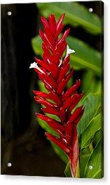 Hawaii Flora 19 Acrylic Print by Charlie Osborn