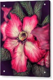 Acrylic Print featuring the digital art Hawaii Flower by Darren Cannell