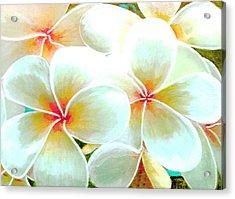 Hawaii Plumeria Frangipani Flowers #86 Acrylic Print by Donald k Hall