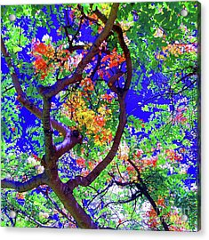 Acrylic Print featuring the photograph Hawaii Shower Tree Flowers In Abstract by D Davila