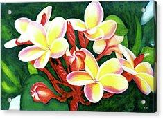 Hawaii Tropical Plumeria Flower #205 Acrylic Print by Donald k Hall