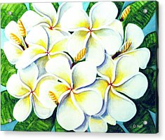 Hawaii Tropical Plumeria Flower #224 Acrylic Print by Donald k Hall