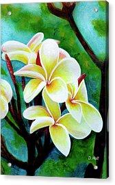 Hawaii Tropical Plumeria Flower #225 Acrylic Print by Donald k Hall