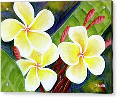 Hawaii Tropical Plumeria Flower #298, Acrylic Print by Donald k Hall