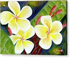 Hawaii Tropical Plumeria Flower #298, Acrylic Print by Donald k Hall