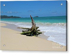 Hawaiian Beach Acrylic Print by Anthony Jones