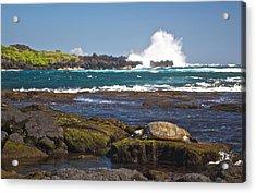 Hawaiian Green Sea Turtle  Acrylic Print by James Walsh