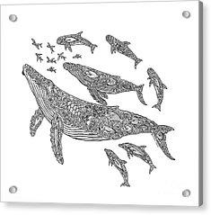 Hawaiian Humpbacks Acrylic Print
