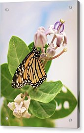 Acrylic Print featuring the photograph Hawaiian Monarch by Heather Applegate