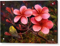 Hawaiian Pink Plumeria And Amakihi Bird Acrylic Print
