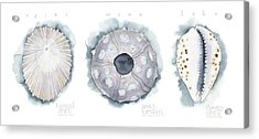 Hawaiian Seashells Acrylic Print