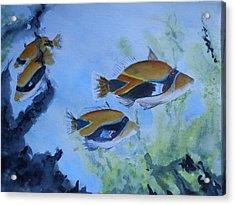 Hawaiian Trigger Fish Acrylic Print
