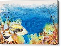 Hawaiian Triggerfish Acrylic Print by Tanya L Haynes - Printscapes