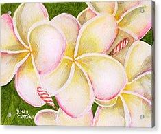 Hawaiian Tropical Plumeria Flower #483 Acrylic Print by Donald k Hall