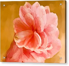Hawian Ginger Flower Acrylic Print by Daniel D Miller