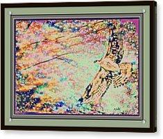 Hawk And Sky Acrylic Print