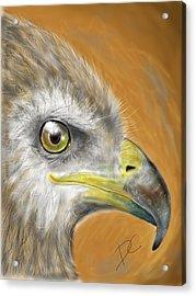 Hawk Acrylic Print by Darren Cannell