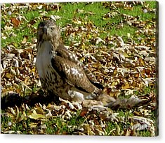 Hawk Falling Leaves Acrylic Print