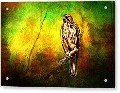 Hawk On Branch Acrylic Print