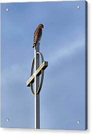 Acrylic Print featuring the photograph Hawk On Steeple by Richard Rizzo