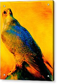 Acrylic Print featuring the painting Hawk Spirit by FeatherStone Studio Julie A Miller