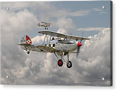 Hawker Fury Acrylic Print by Pat Speirs