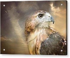 Hawkeyed Acrylic Print by Heather Applegate