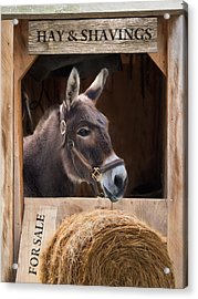 Acrylic Print featuring the photograph Hay And Shavings by Robin-Lee Vieira