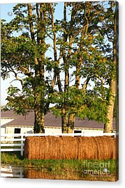 Hay Bales And Trees Acrylic Print