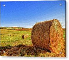 Hay Bales Acrylic Print by Dominic Piperata