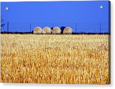 Hay Hay Acrylic Print