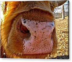 Hay You Smell Good Acrylic Print by Lori Miller
