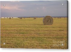 Hayfield Perspective Acrylic Print by Susan Williams