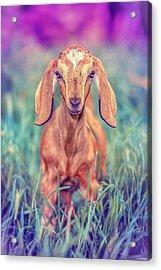 Hazel Acrylic Print