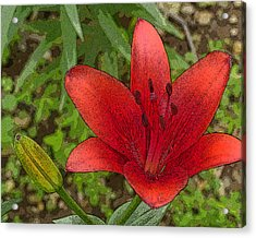 Acrylic Print featuring the digital art Hazelle's Red Lily by Jana Russon