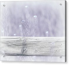 Acrylic Print featuring the photograph Hazy Lavender Wildflowers by Jennie Marie Schell