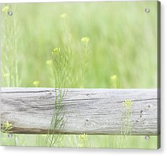 Acrylic Print featuring the photograph Hazy Yellow Wildflowers by Jennie Marie Schell