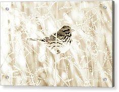 He Feeds The Sparrows Acrylic Print