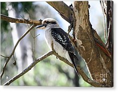Acrylic Print featuring the photograph He Sings The Song Of The Bush by Linda Lees