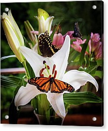 Acrylic Print featuring the photograph He Still Gives Me Butterflies by Karen Wiles