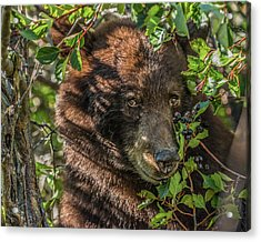 He Was Hiding In A Tree Acrylic Print