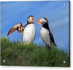 He Went That Way Acrylic Print by Betsy Knapp