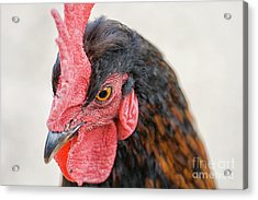 Head Of Rooster In Close Up Acrylic Print