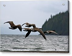 Acrylic Print featuring the photograph Heading South by Cathie Douglas