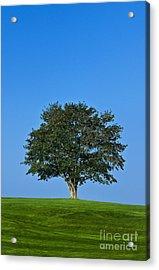 Healthy Tree Acrylic Print by John Greim