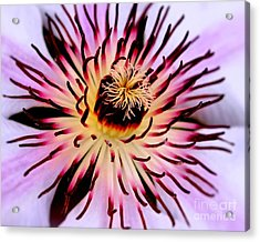 Heart Of A Clematis Acrylic Print