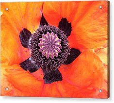 Heart Of A Poppy Acrylic Print